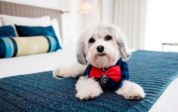 What Can Dog Hotels Do For Your Dog